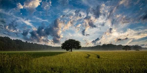 पेड़ पर कविता