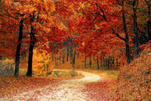 वन संरक्षण पर कविता