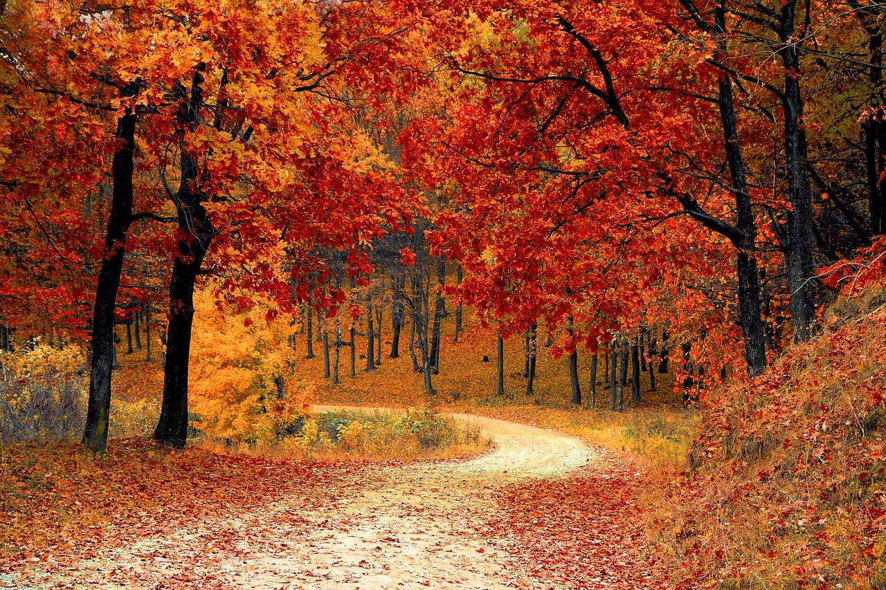 पेड़ पौधों पर कविता