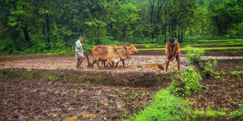 किसान पर छोटी कविता