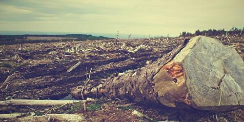 कविता पर्यावरण पर
